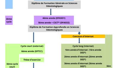 Schéma d'études en odontologie